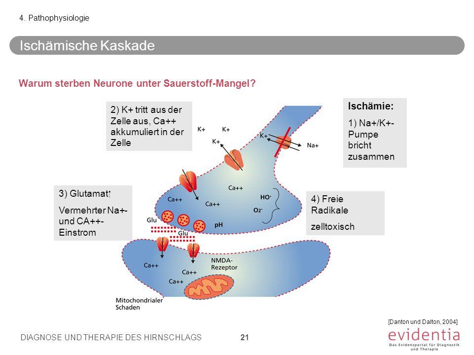 Warum sterben Neurone unter Sauerstoff-Mangel.4.