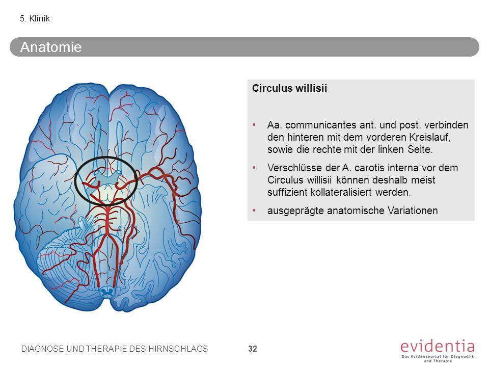 5. Klinik Circulus willisii Aa. communicantes ant. und post. verbinden den hinteren mit dem vorderen Kreislauf, sowie die rechte mit der linken Seite.