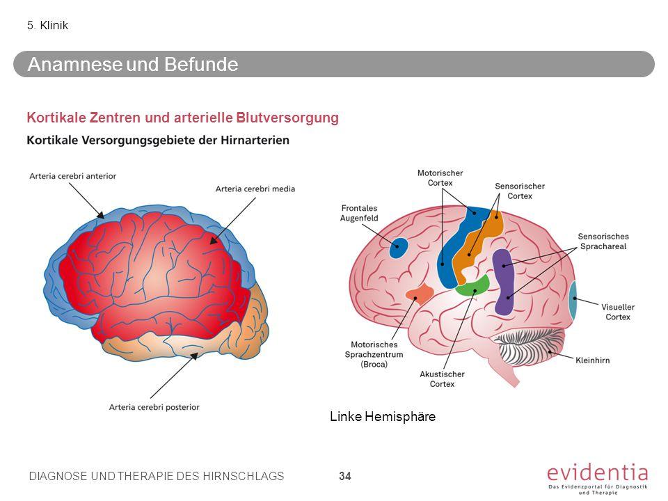 Kortikale Zentren und arterielle Blutversorgung 5. Klinik Linke Hemisphäre Anamnese und Befunde DIAGNOSE UND THERAPIE DES HIRNSCHLAGS 34