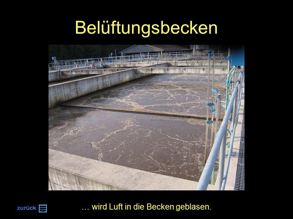 Belüftungsbecken … wird Luft in die Becken geblasen.