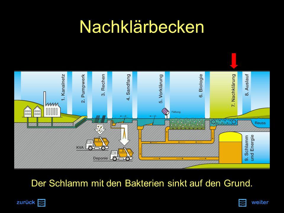 Nachklärbecken Der Schlamm mit den Bakterien sinkt auf den Grund.