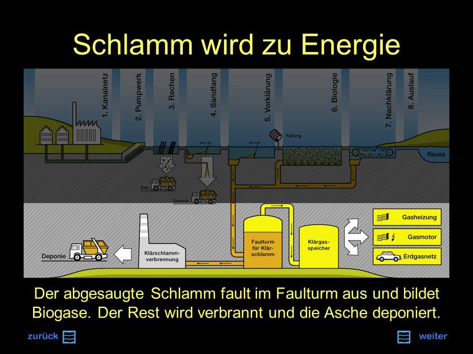 Schlamm wird zu Energie Der abgesaugte Schlamm fault im Faulturm aus und bildet Biogase.
