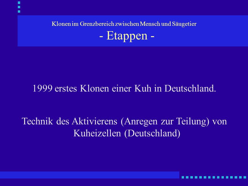 Klonen im Grenzbereich zwischen Mensch und Säugetier - Etappen - 1999 erstes Klonen einer Kuh in Deutschland. Technik des Aktivierens (Anregen zur Tei