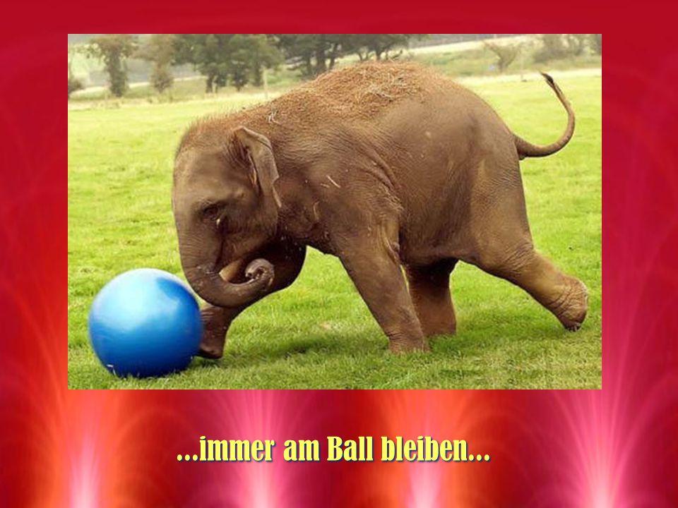 ...immer am Ball bleiben...