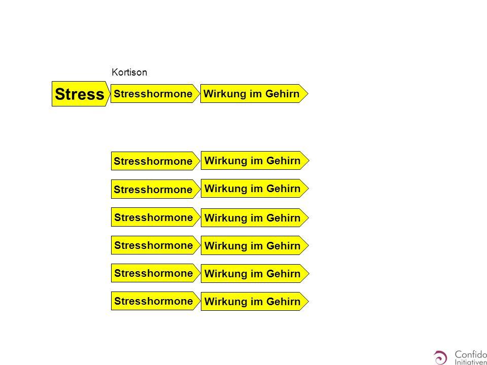 Kortison Stresshormone Wirkung im Gehirn Stress Stresshormone Wirkung im Gehirn Stresshormone Wirkung im Gehirn
