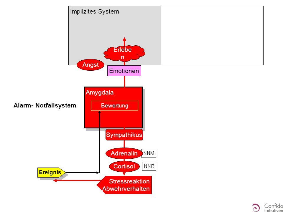 Amygdala Alarm- Notfallsystem Stressreaktion Abwehrverhalten Ereignis Angst Emotionen Erlebe n Bewertung Cortisol NNM NNR Sympathikus Adrenalin