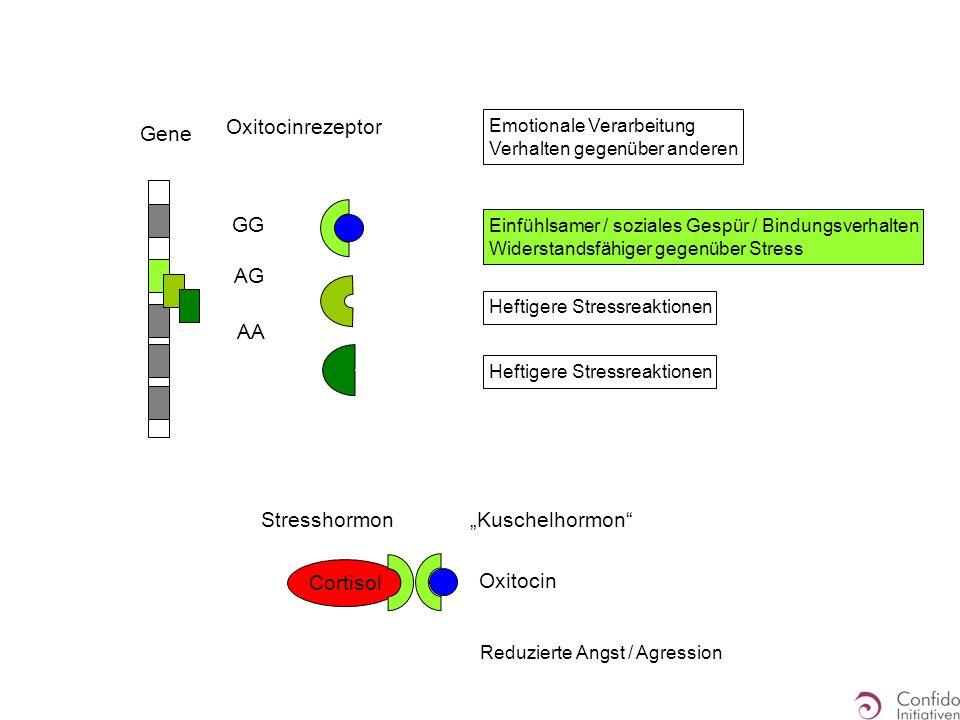 """Gene GG AG AA Oxitocinrezeptor Emotionale Verarbeitung Verhalten gegenüber anderen Einfühlsamer / soziales Gespür / Bindungsverhalten Widerstandsfähiger gegenüber Stress Heftigere Stressreaktionen Reduzierte Angst / Agression """"Kuschelhormon Oxitocin Stresshormon Cortisol"""