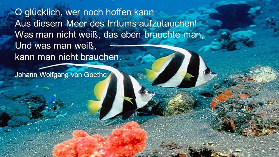 Das Meer ist der Raum der Hoffnung. Friedrich von Schiller