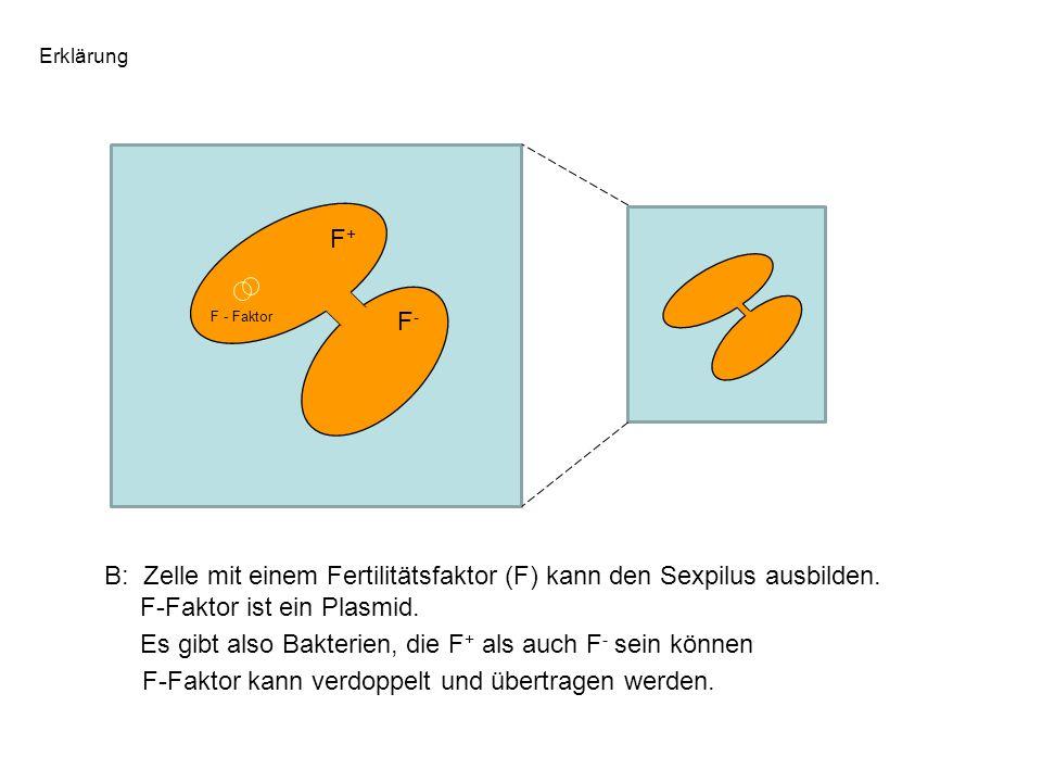 Erklärung F - Faktor B: Zelle mit einem Fertilitätsfaktor (F) kann den Sexpilus ausbilden. F-Faktor ist ein Plasmid. Es gibt also Bakterien, die F + a