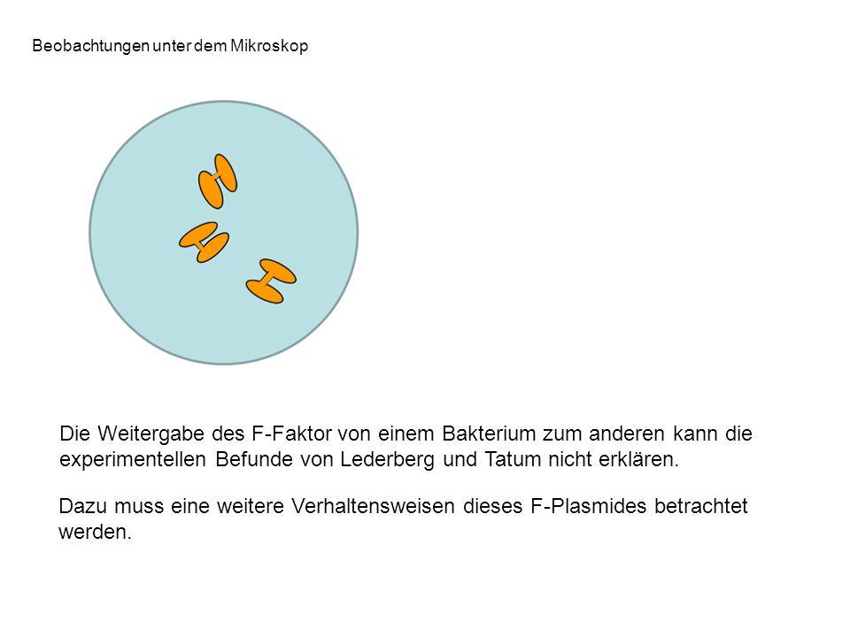 Die Weitergabe des F-Faktor von einem Bakterium zum anderen kann die experimentellen Befunde von Lederberg und Tatum nicht erklären. Dazu muss eine we