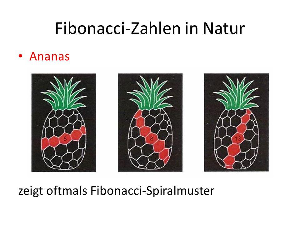 Ananas zeigt oftmals Fibonacci-Spiralmuster Fibonacci-Zahlen in Natur