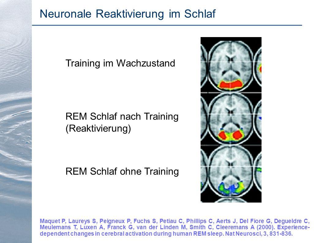 Neuronale Reaktivierung im Schlaf Maquet P, Laureys S, Peigneux P, Fuchs S, Petiau C, Phillips C, Aerts J, Del Fiore G, Degueldre C, Meulemans T, Luxe
