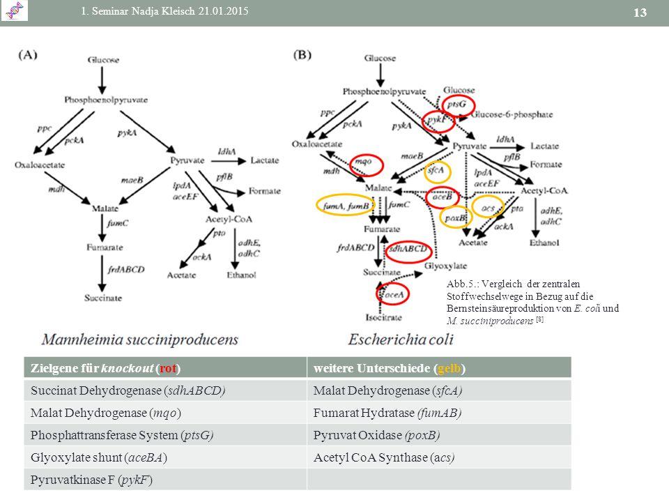 1. Seminar Nadja Kleisch 21.01.2015 13 Zielgene für knockout (rot)weitere Unterschiede (gelb) Succinat Dehydrogenase (sdhABCD)Malat Dehydrogenase (sfc