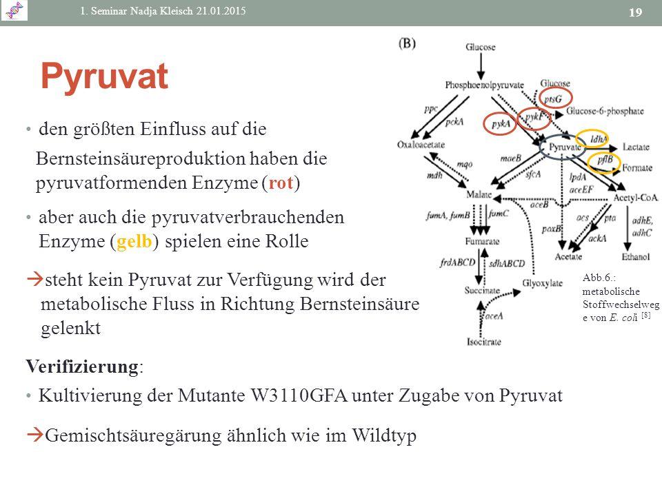 den größten Einfluss auf die Bernsteinsäureproduktion haben die pyruvatformenden Enzyme (rot) aber auch die pyruvatverbrauchenden Enzyme (gelb) spiele