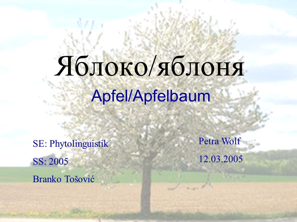 1 Яблоко/яблоня Apfel/Apfelbaum SE: Phytolinguistik SS: 2005 Branko Tošović Petra Wolf 12.03.2005