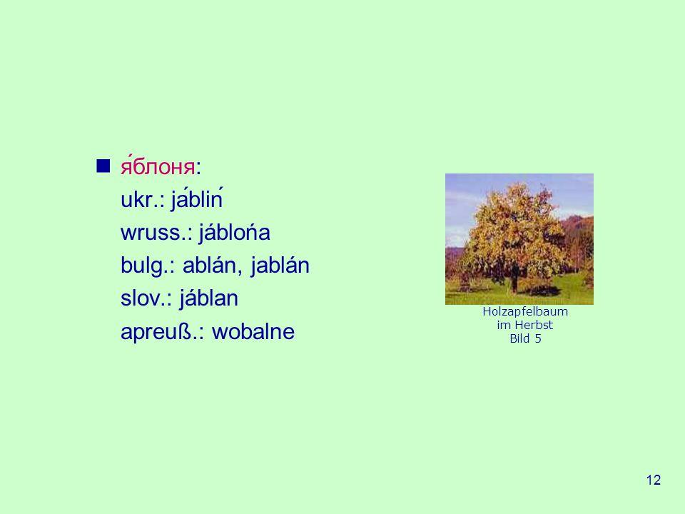 12 яблоня: ukr.: jablin wruss.: jáblońa bulg.: ablán, jablán slov.: jáblan apreuß.: wobalne Holzapfelbaum im Herbst Bild 5