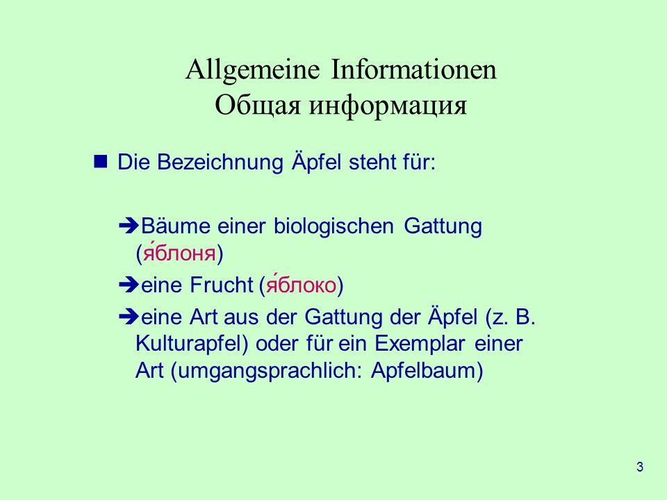 3 Allgemeine Informationen Общая информация Die Bezeichnung Äpfel steht für:  Bäume einer biologischen Gattung (яблоня)  eine Frucht (яблоко)  eine Art aus der Gattung der Äpfel (z.