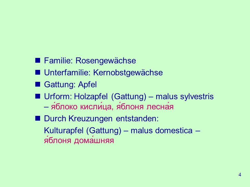 4 Familie: Rosengewächse Unterfamilie: Kernobstgewächse Gattung: Apfel Urform: Holzapfel (Gattung) – malus sylvestris – яблоко кислица, яблоня лесная Durch Kreuzungen entstanden: Kulturapfel (Gattung) – malus domestica – яблоня домашняя