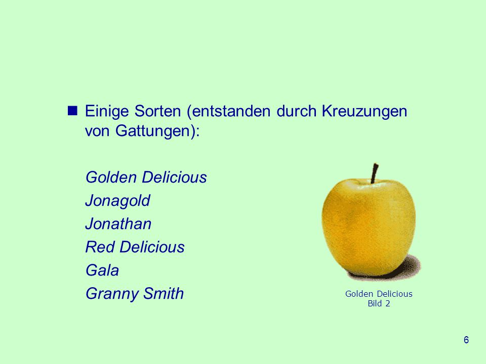 6 Einige Sorten (entstanden durch Kreuzungen von Gattungen): Golden Delicious Jonagold Jonathan Red Delicious Gala Granny Smith Golden Delicious Bild 2