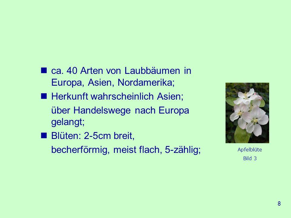 19 In der Literatur: Im Märchen Schneewittchen: Schneewittchen hat äpfelrote Bäckchen.