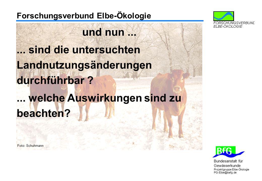 Bundesanstalt für Gewässerkunde Projektgruppe Elbe-Ökologie PG-Elbe@bafg.de Forschungsverbund Elbe-Ökologie Foto: Schuhmann und nun...... sind die unt