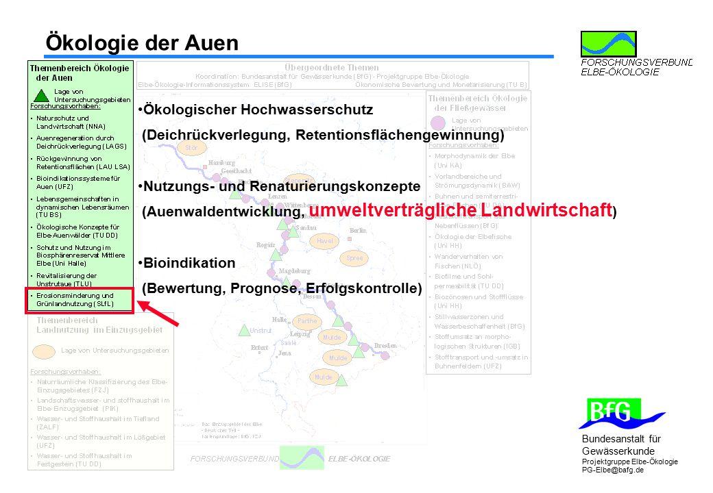 Bundesanstalt für Gewässerkunde Projektgruppe Elbe-Ökologie PG-Elbe@bafg.de Ökologie der Auen Ökologischer Hochwasserschutz (Deichrückverlegung, Reten