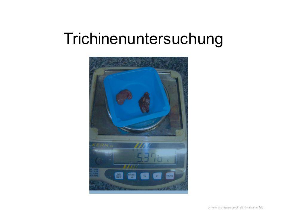 Trichinenuntersuchung Dr.Reinhard Bange Landkreis Anhalt-Bitterfeld
