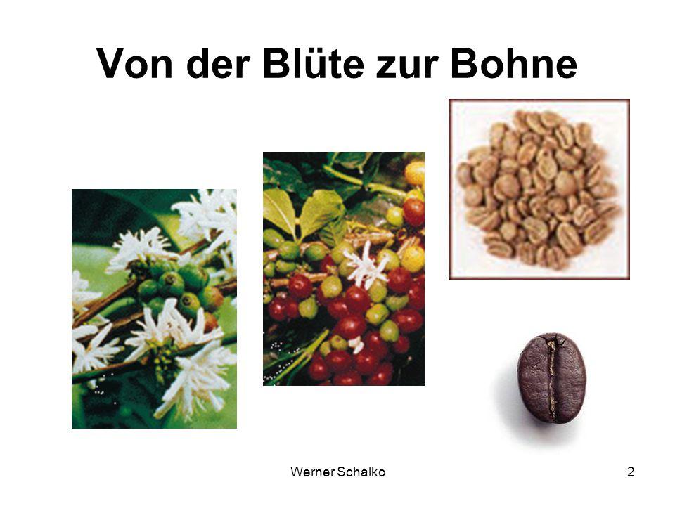 Werner Schalko23 Geschmackstoffe Bitter Coffein (30 %) Maillardprodukte Sauer Div. Säuren