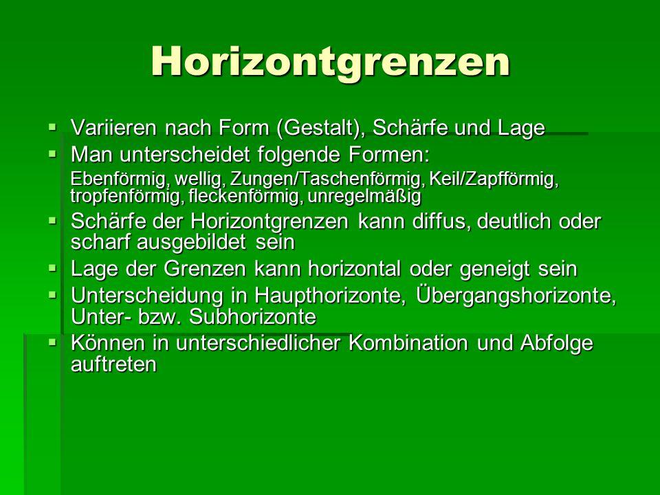Horizontgrenzen  Variieren nach Form (Gestalt), Schärfe und Lage  Man unterscheidet folgende Formen: Ebenförmig, wellig, Zungen/Taschenförmig, Keil/