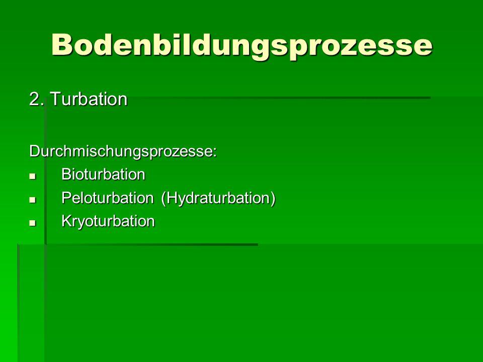 Bodenbildungsprozesse 2. Turbation Durchmischungsprozesse: Bioturbation Bioturbation Peloturbation (Hydraturbation) Peloturbation (Hydraturbation) K