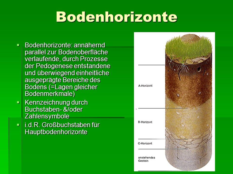 Bodenhorizonte  Bodenhorizonte: annähernd parallel zur Bodenoberfläche verlaufende, durch Prozesse der Pedogenese entstandene und überwiegend einheit