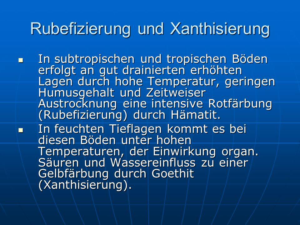 Bodengeo- Quiz BodenwasserBodentypenBodenbildungs-prozesseVerschiedenes 20 20 40 40 60 60 80 80 100 100