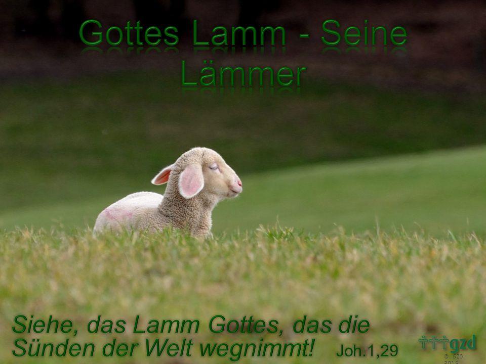 6 Wir alle irrten umher wie Schafe, wir wandten uns jeder auf seinen eigenen Weg; aber der HERR ließ ihn treffen unser aller Schuld.