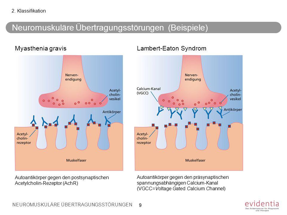 Neuromuskuläre Übertragungsstörungen (Beispiele) NEUROMUSKULÄRE ÜBERTRAGUNGSSTÖRUNGEN 9 2. Klassifikation Autoantikörper gegen den postsynaptischen Ac