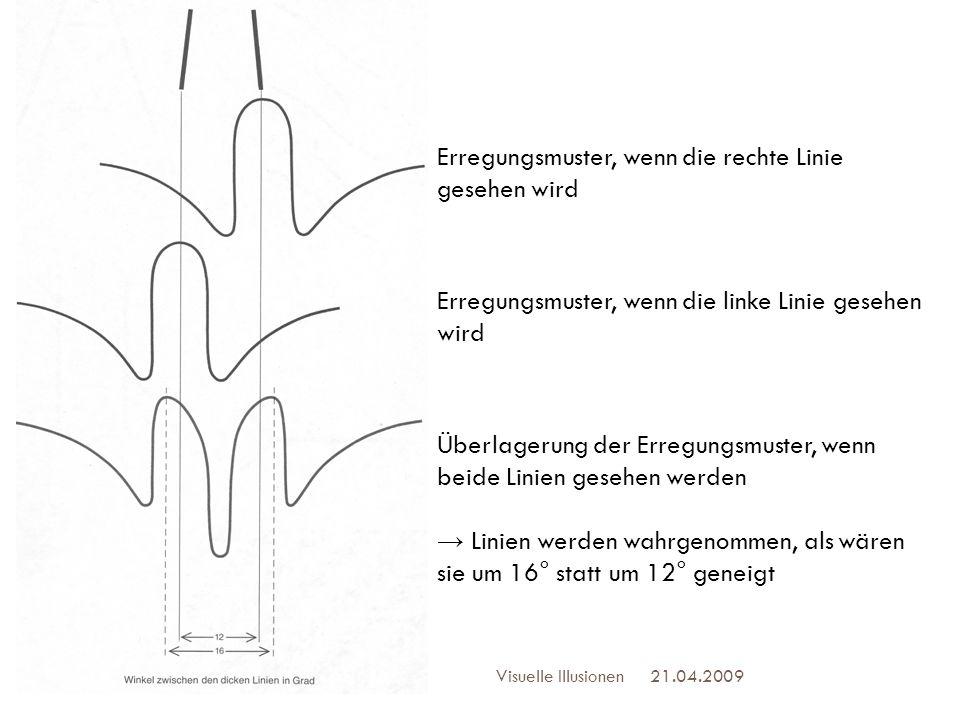21.04.2009Visuelle Illusionen 21 Erregungsmuster, wenn die rechte Linie gesehen wird Erregungsmuster, wenn die linke Linie gesehen wird Überlagerung d