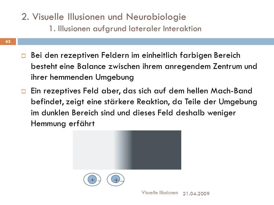 2. Visuelle Illusionen und Neurobiologie 1. Illusionen aufgrund lateraler Interaktion  Bei den rezeptiven Feldern im einheitlich farbigen Bereich bes