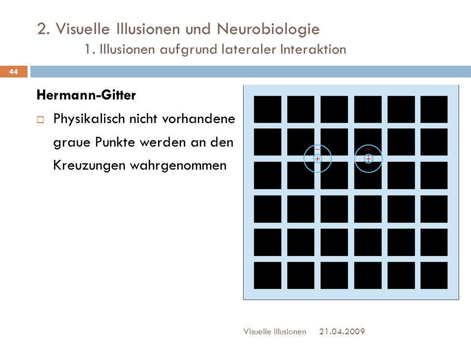 2. Visuelle Illusionen und Neurobiologie 1. Illusionen aufgrund lateraler Interaktion Hermann-Gitter  Physikalisch nicht vorhandene graue Punkte werd