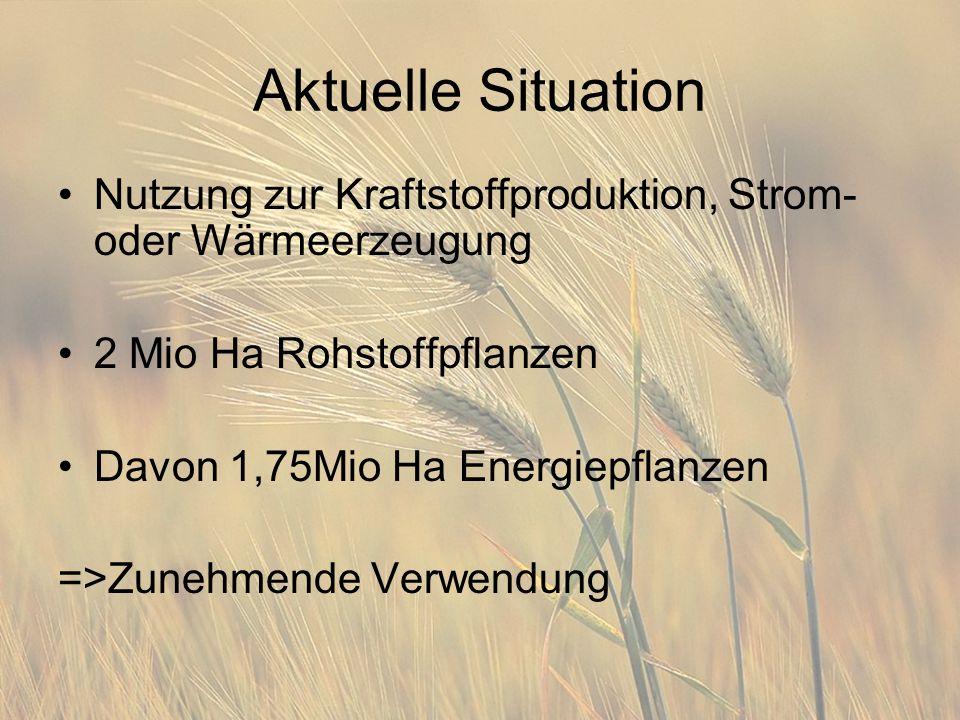 Aktuelle Situation Nutzung zur Kraftstoffproduktion, Strom- oder Wärmeerzeugung 2 Mio Ha Rohstoffpflanzen Davon 1,75Mio Ha Energiepflanzen =>Zunehmende Verwendung