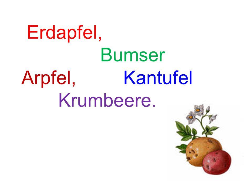 Erdapfel, Bumser Arpfel, Kantufel Krumbeere.