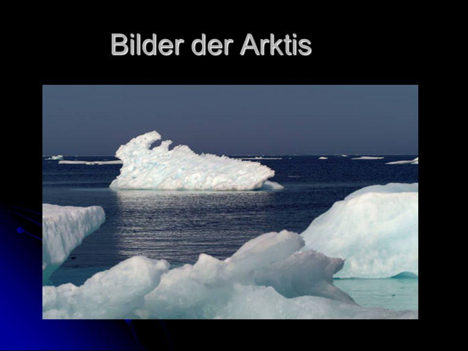 Bilder der Arktis