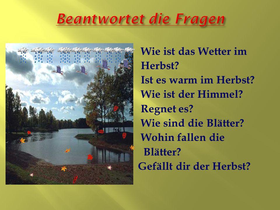 Wie ist das Wetter im Herbst? Ist es warm im Herbst? Wie ist der Himmel? Regnet es? Wie sind die Blätter? Wohin fallen die Blätter? Gefällt dir der He