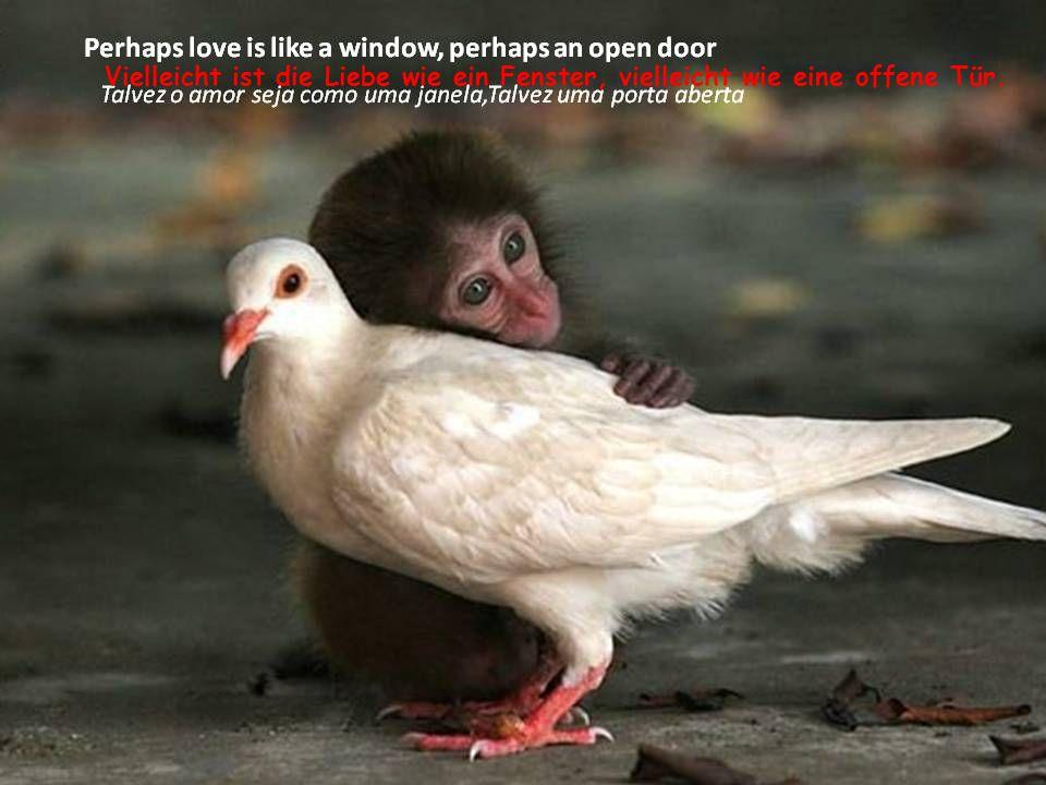 Vielleicht ist die Liebe wie ein Fenster, vielleicht wie eine offene Tür.