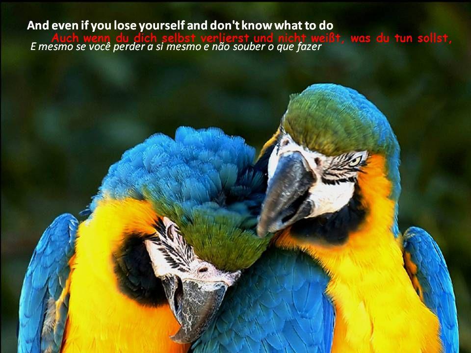 Auch wenn du dich selbst verlierst und nicht weißt, was du tun sollst,