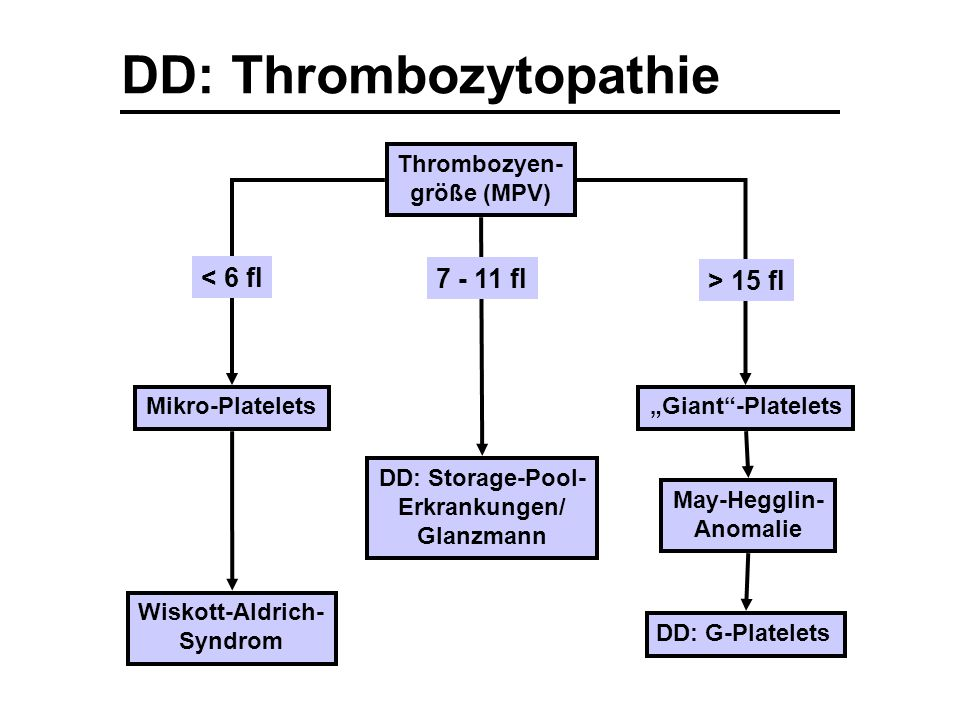 "DD: Thrombozytopathie Thrombozyen- größe (MPV) Mikro-Platelets Wiskott-Aldrich- Syndrom ""Giant""-Platelets May-Hegglin- Anomalie < 6 fl > 15 fl DD: G-P"