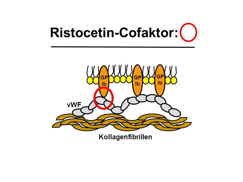 Ristocetin-Cofaktor: Kollagenfibrillen vWF GP Ib GP Ib GP Ib