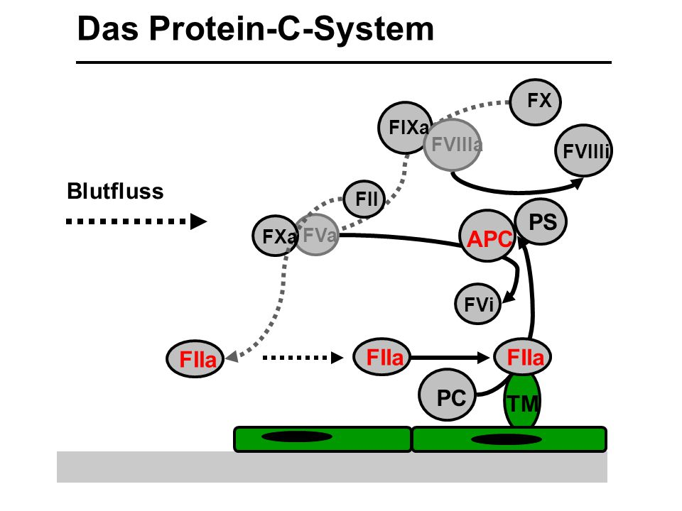 TM FX FIXa FII FIIa FVa Blutfluss FIIa Das Protein-C-System FVIIIa FVIIIi FIIa PC APC FXa PS FVi