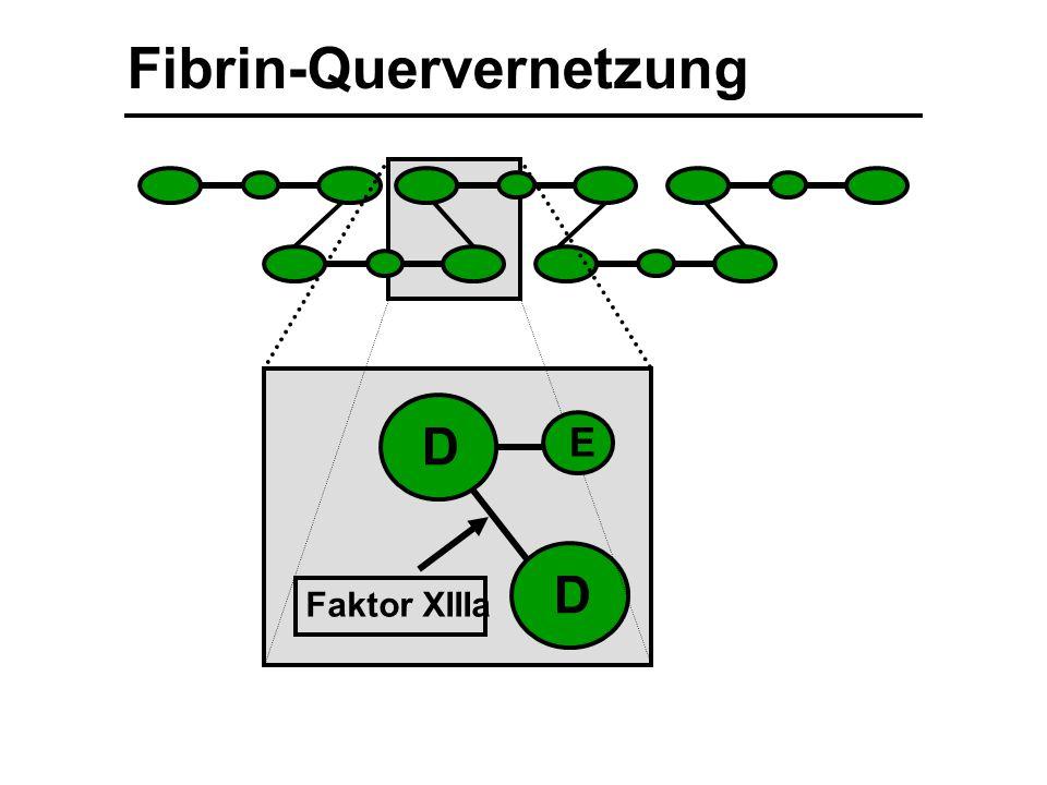 Fibrin-Quervernetzung D D Faktor XIIIa E