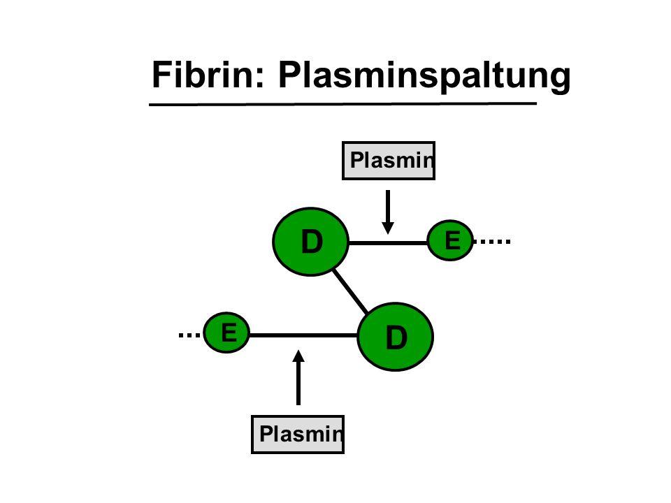 Fibrin: Plasminspaltung D E E D Plasmin