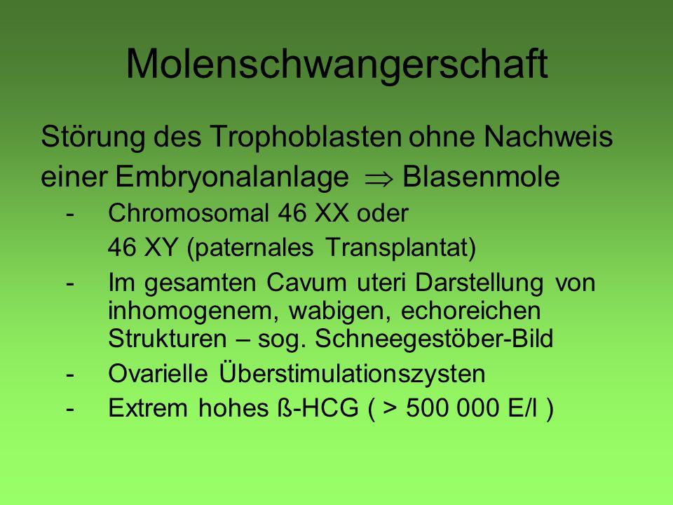Molenschwangerschaft Störung des Trophoblasten ohne Nachweis einer Embryonalanlage  Blasenmole -Chromosomal 46 XX oder 46 XY (paternales Transplantat) -Im gesamten Cavum uteri Darstellung von inhomogenem, wabigen, echoreichen Strukturen – sog.