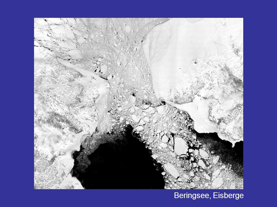 Beringsee, Eisberge